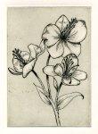 botanical etching of flower