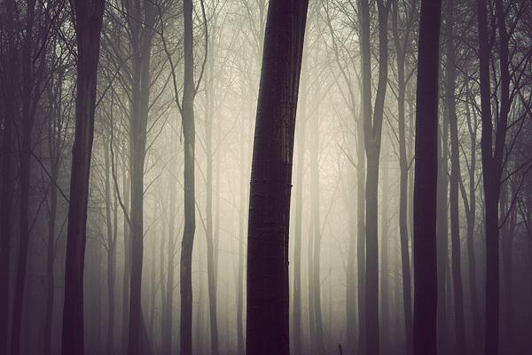 kim-holtermand-trees2